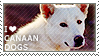 I love Canaan Dogs by WishmasterAlchemist