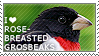 I love Rose-breasted Grosbeaks by WishmasterAlchemist