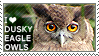 I love Dusky Eagle-Owls