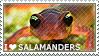 I love Salamanders