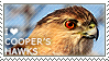 I love Cooper's Hawks by WishmasterAlchemist