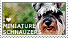 I love Miniature Schnauzers by WishmasterAlchemist