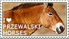 I love Przewalski's Horses