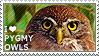 I love Pygmy Owls by WishmasterAlchemist