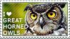 I love Great Horned Owls