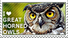 I love Great Horned Owls