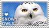 I love Snowy Owls by WishmasterAlchemist
