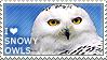I love Snowy Owls