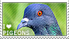 I love Pigeons by WishmasterAlchemist
