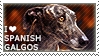 I love Spanish Galgos by WishmasterAlchemist