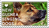 I love New Guinea Singing Dogs