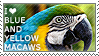 I love Blue-and-Yellow Macaws