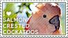 I love Salmon-crested Cockatoos