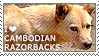 I love Cambodian Razorback Dogs by WishmasterAlchemist