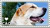 I love Central Asian Shepherd Dogs by WishmasterAlchemist