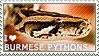 I love Burmese Pythons