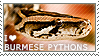 I love Burmese Pythons by WishmasterAlchemist