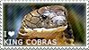 I love King Cobras