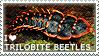 I love Trilobite Beetles by WishmasterAlchemist