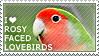 I love Rosy-faced Lovebirds by WishmasterAlchemist