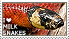 I love Milk Snakes by WishmasterAlchemist