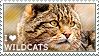 I love Wildcats by WishmasterAlchemist