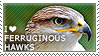 I love Ferruginous Hawks by WishmasterAlchemist