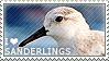 I love Sanderlings by WishmasterAlchemist