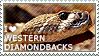 I love Western Diamondback Rattlesnakes