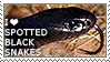 I love Spotted Black Snakes by WishmasterAlchemist