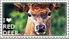 I love Red Deer by WishmasterAlchemist