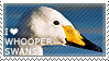 I love Whooper Swans by WishmasterAlchemist