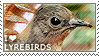 I love Lyrebirds by WishmasterAlchemist