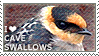 I love Cave Swallows by WishmasterAlchemist
