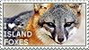 I love Island Foxes