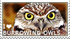 I love Burrowing Owls