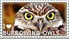I love Burrowing Owls by WishmasterAlchemist