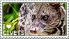 I love Civets