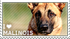 I love Malinois by WishmasterAlchemist
