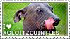 I love Xoloitzcuintles