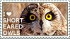 I love Short-eared Owls