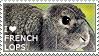 I love French Lops by WishmasterAlchemist