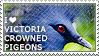 I love Victoria Crowned Pigeons