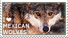 I love Mexican Wolves