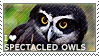 I love Spectacled Owls