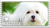 I love Maltese by WishmasterAlchemist