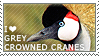 I love Grey Crowned Cranes by WishmasterAlchemist