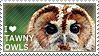 I love Tawny Owls