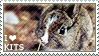 I love Kits [Young Rabbits]