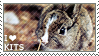 I love Kits [Young Rabbits] by WishmasterAlchemist